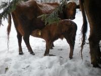Djuren på gården